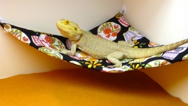 Hammock-Bearded-Dragons-Skulls-adhesive-1