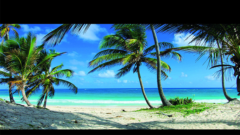 Reptile Habitat Background Tropical Beach And Palm Trees