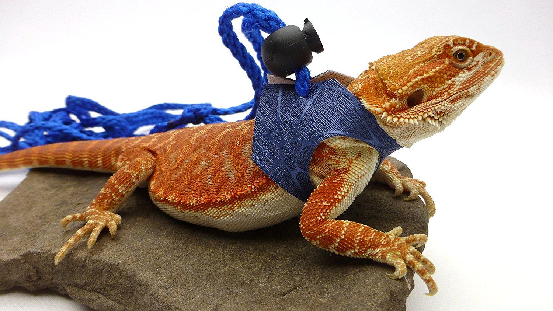 161c46a5130995 Carolina Designer Dragons Ogle Lizard Leash, Limited Edition Blue Web,  medium size - Carolina Designer Dragons