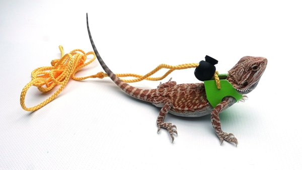 how to make a small lizard leash