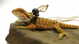 Ogle Lizard Leash, Limited Edition Green Scales