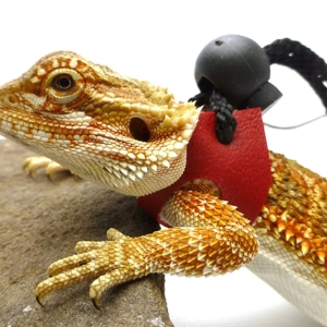 Ogle Lizard Leash, Limited Edition Red