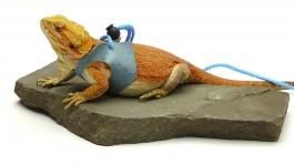 Ogle Lizard Leash, Limited Edition Turquoise Web, large size