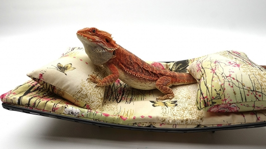 chaise-lounge-for-bearded-dragons-asian-little-pink-flowers-and-butterflies-fabric-1