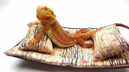 chaise-lounge-for-bearded-dragons-asian-little-pink-flowers-fabric-1