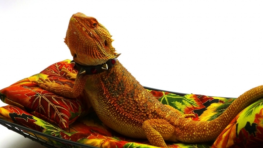 chaise-lounge-for-bearded-dragons-autumn-leaves-fabric-1