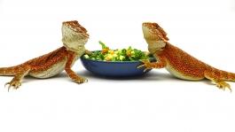 Salad Bowls, pair, Cadet Blue & Vanilla