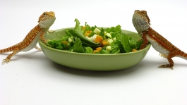 Salad Bowls, pair, Olive & White