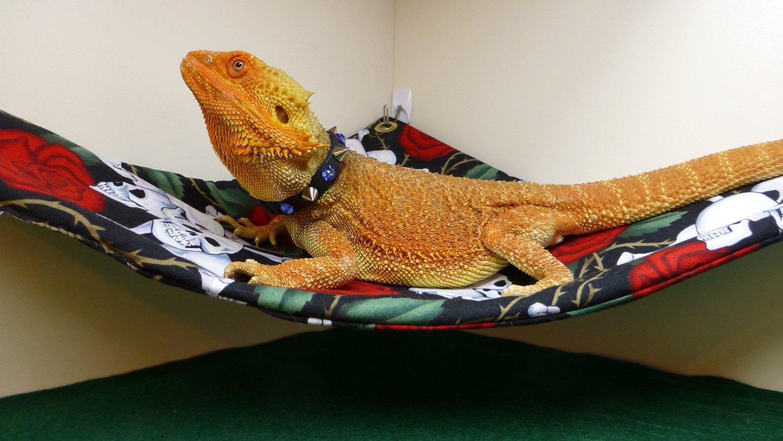 Carolina Designer Dragons Hammock For Bearded Dragons