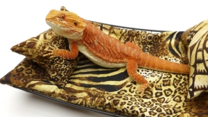 Chaise Lounge for Bearded Dragons, Safari fabric