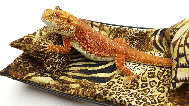 Gold dragon lounge golden dragon post falls hours
