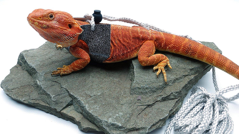 2b19eb61510396 Carolina Designer Dragons Ogle Lizard Leash, Limited Edition Sparkly ...