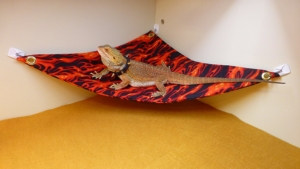 Hammock for Bearded Dragons, Flames fabric with suction cup hooks