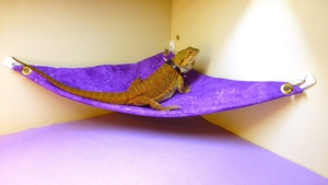 Hammock for Bearded Dragons, Purple Sponged fabric with suction cup hooks