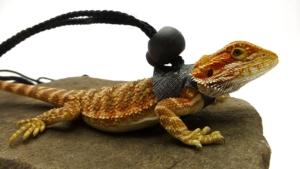 Ogle Lizard Leash, Limited Edition Black Web