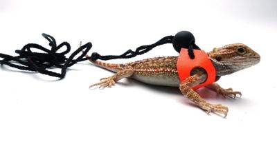 Ogle Lizard Leash, Limited Edition Fluorescent Orange
