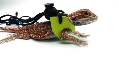 Ogle Lizard Leash, Limited Edition Fluorescent Yellow