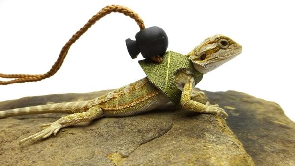 Ogle Lizard Leash, Limited Edition Olive Web