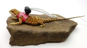 Ogle Lizard Leash, Limited Edition Pink