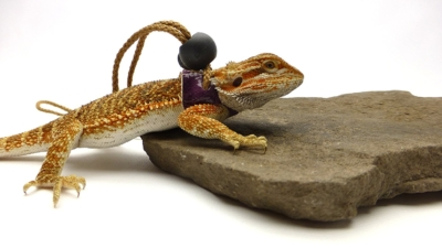 Ogle Lizard Leash, Limited Edition Purple Scales