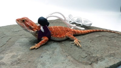 Ogle Lizard Leash, Limited Edition Sparkly Fuschia