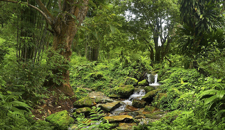 Carolina Designer Dragons Reptile Habitat Background Rain Forest
