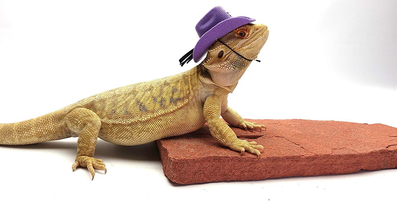 32f1cebfa7e198 Carolina Designer Dragons Bearded Dragon Cowboy Hat, Purple ...